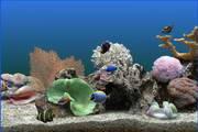 热带鱼屏保 v3.3